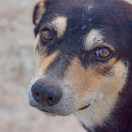 Best Friend by Ameer Shaik Basha - Animals - Dogs Portraits ( pet, contest, animal,  )