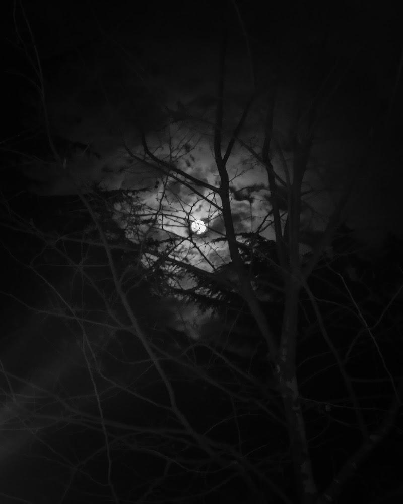 Notte luna di alessandra_frankini