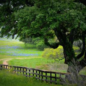 Enchanting Road by Rhonda Kay - Landscapes Prairies, Meadows & Fields