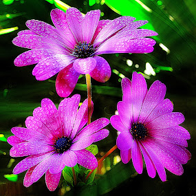 Triple treat. by Dave  Horne - Flowers Flower Gardens