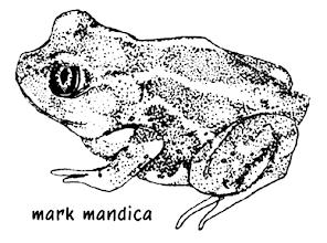 Photo: Scaphiopus holbrookii | Eastern spadefoot toad