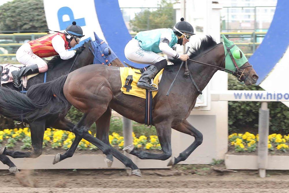 Quillecano (Seeking The Dia) se quedó con la victoria en Handicap (1200m-Arena-HCH).
