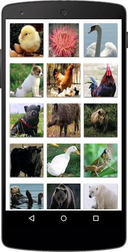 Nama Binatang  screenshots 7