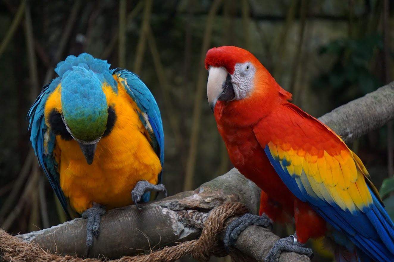 Macaw Parrots Moody Gardens Rainforest Pyramid