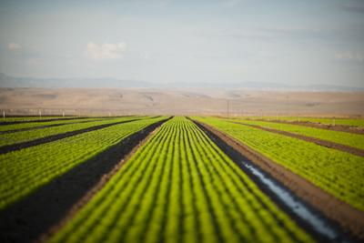 Photo: Israel Morales Farm