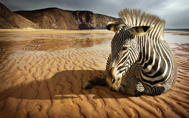 Zebra - New Tab in HD