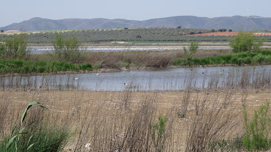 Photo: On shore salt lagoon, attracts a variety of marine birds too