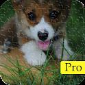 Puzzle Zoo: Animal Quiz icon