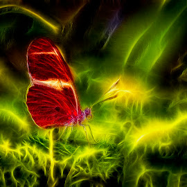 Butterfly by Adolf Beck - Digital Art Abstract ( green, abstract art, color, light, butterfly, abstraction, abstract, colorful )
