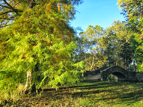 Photo: Beautiful fading sunlight on trees by a stone bridge at Eastwood Park in Dayton, Ohio.
