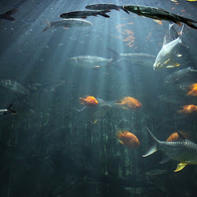 by Piey A - Landscapes Underwater