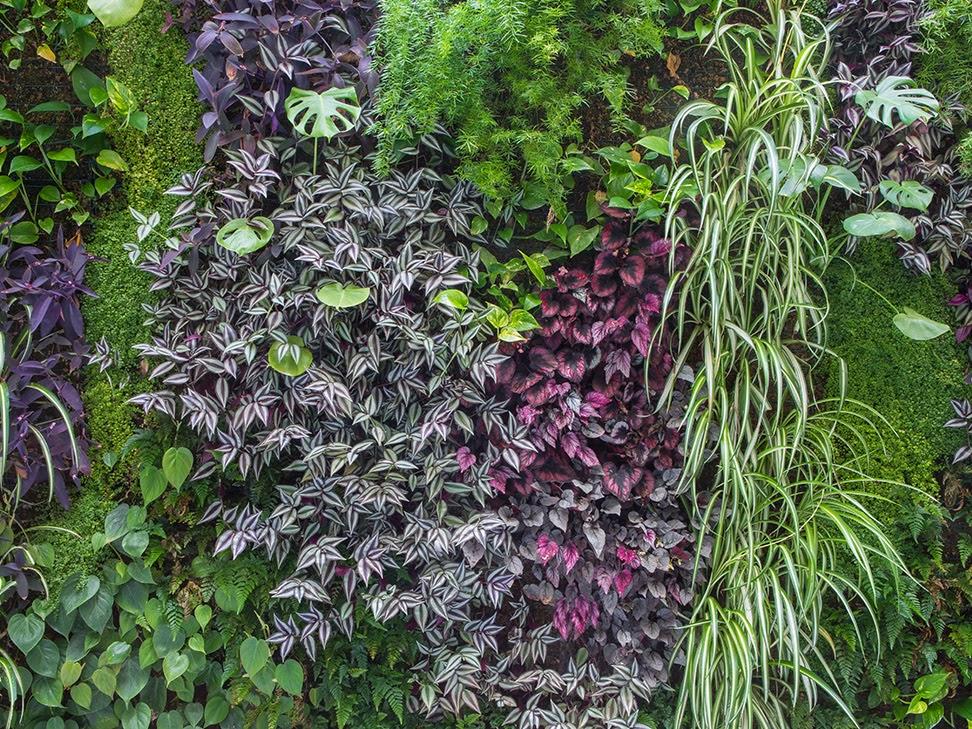 Jardín vertical en Valencia tapizado