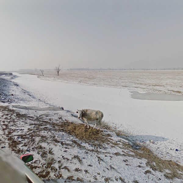 Bio Kombinat | Mongolia