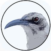 BirdsEye Galápagos