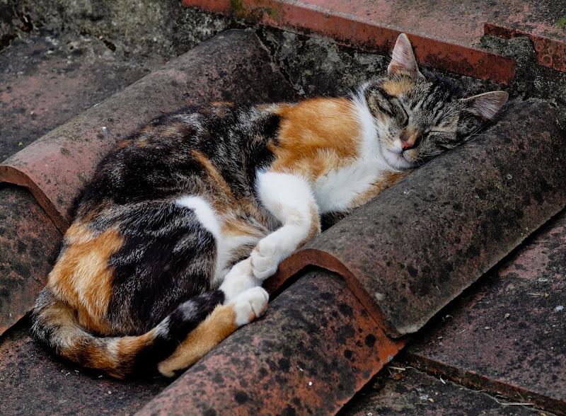 La siesta (sul tetto) di Patrix