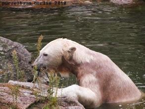 Photo: Knut holt sich einen Fisch von der Insel ;-)