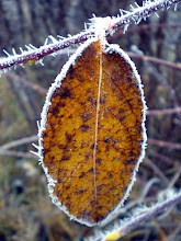 Photo: one leaf hanging on the twig