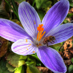 by Keld Helbig Hansen - Flowers Single Flower (  )