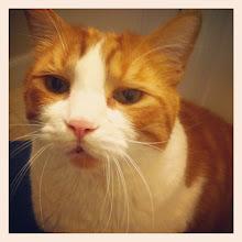 Photo: Waiting for the morning brush #cat #catstagram #pet #kitty #intercer #brush - via Instagram, http://instagr.am/p/MYWfkNpfoH/