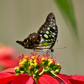 A butterfly to a flower by Amit Naskar - Animals Insects & Spiders