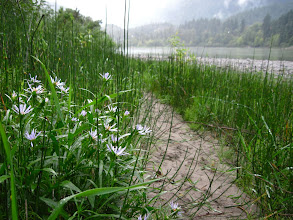 Photo: Along the banks of the Fraser River