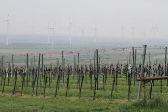 Photo: Vinohrady severne od Prellenkirchenu. Veterné turbíny im robia futuristickú kulisu