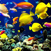 Aquarium 3 live wallpaper
