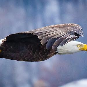 Ron Meyers Gliding.jpg