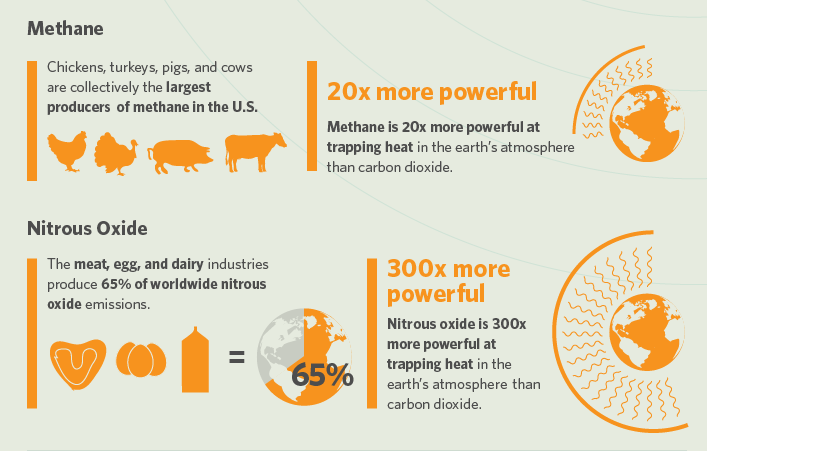 effects of vegan diet on the environment
