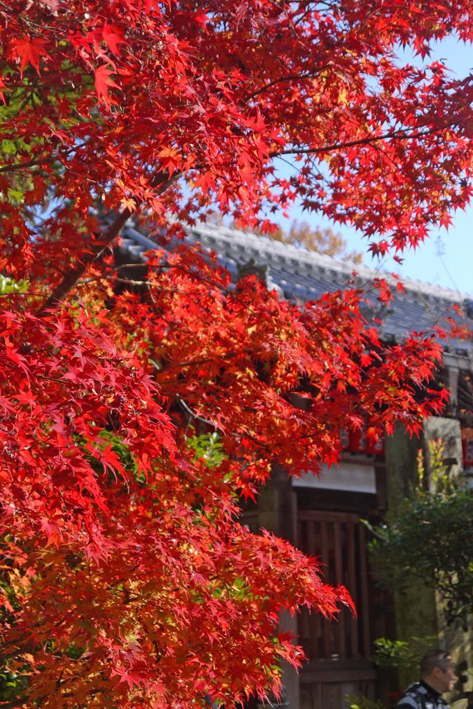 Autumn in Kyoto, Sekizan Zen-in temple
