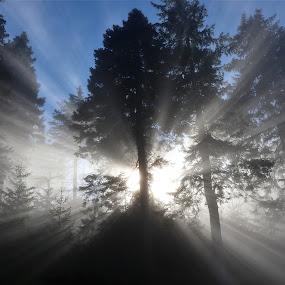 slunce v lese by Jarka Hk - Landscapes Forests ( light, nature, beatiful, trees, sun, landscape )