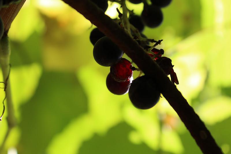 Autumn 🍃  di Oly