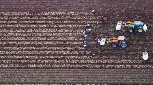 Convocan el II Concurso fotográfico Medio Rural y Pesquero en Andalucía 2020