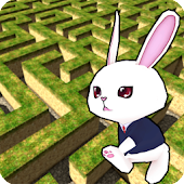 Rabbit explore the 3D maze!!