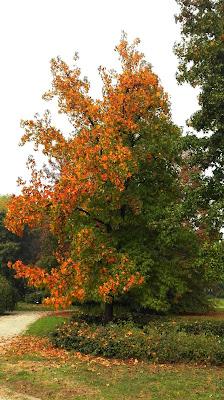 l'autunno arriva da nord di Lory67