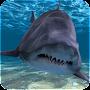 Download Shark Attack Live Wallpaper apk