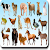 AtoZ Animal Name file APK for Gaming PC/PS3/PS4 Smart TV
