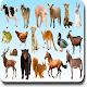 AtoZ Animal Name (app)