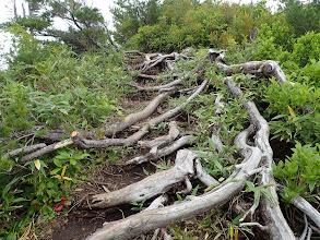 木の根が邪魔に