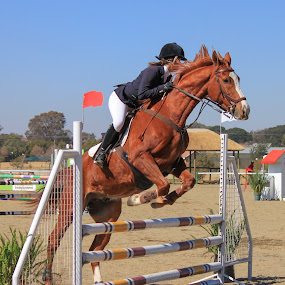Showjumping by Dirk Luus - Sports & Fitness Other Sports ( rider, equine, horse, sport, showjumping,  )