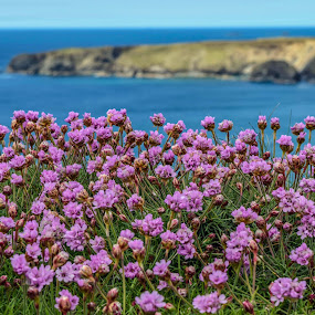 Bedruthan Blooms by Jolyon Vincent - Flowers Flowers in the Wild