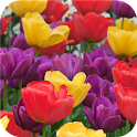 Spring garden. Live wallpaper icon