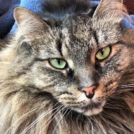 Green eyes by Kimberly Hunker - Uncategorized All Uncategorized ( green, cat, eyes )