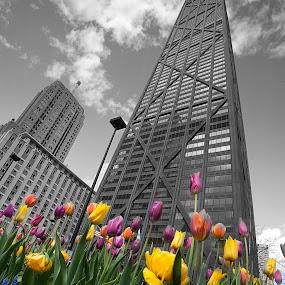 John and tulips by Cristobal Garciaferro Rubio - Buildings & Architecture Public & Historical ( tulip, tulips, chicago, john hancock, city )