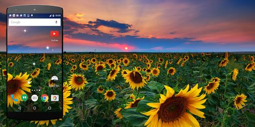 太陽の花のライブ壁紙