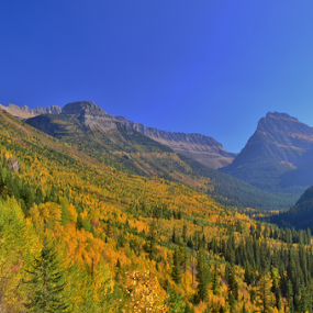 Logan Pass by Don Evjen - Landscapes Mountains & Hills ( pines, going to the sun road, blue sky, glacier park, montana, forest, yellow leaves, fall follage, pass )