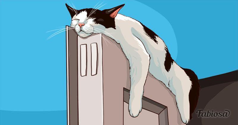 segnali di pericolo di vermi nei gatti