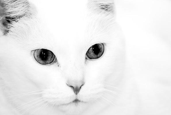 Bianco di alepava