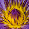 IMG_6895-Edit.jpg