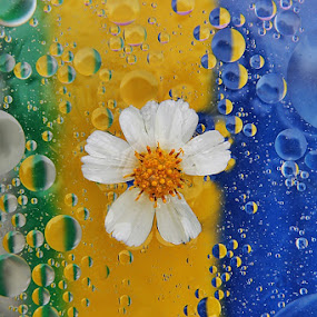 OIL IN WATER AND LITTLE FLOWER. by Megarianti Megarianti - Abstract Macro